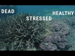40995unilad-imageoptim-deadstressedhealthycoral